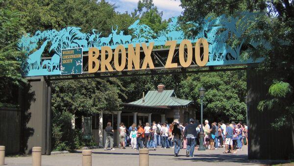 Входные ворота в зоопарк Бронкса - Sputnik Ўзбекистон
