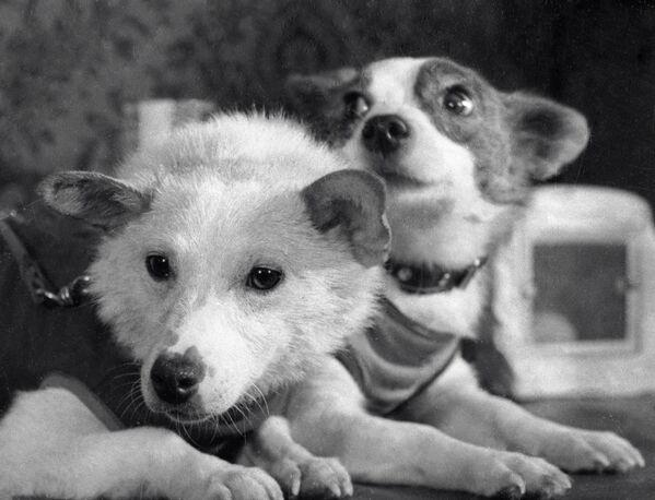 Советские собаки-космонавты Белка и Стрелка - Sputnik Узбекистан