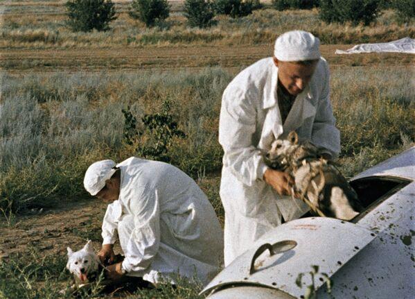Врачи извлекают подопытных собак из кабины ракеты - Sputnik Узбекистан