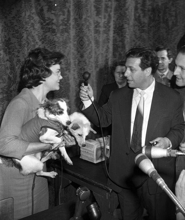 Собаки Белка и Стрелка, побывавшие в космосе, на интервью, которое берет корреспондент Московского радио, 1960 год - Sputnik Узбекистан
