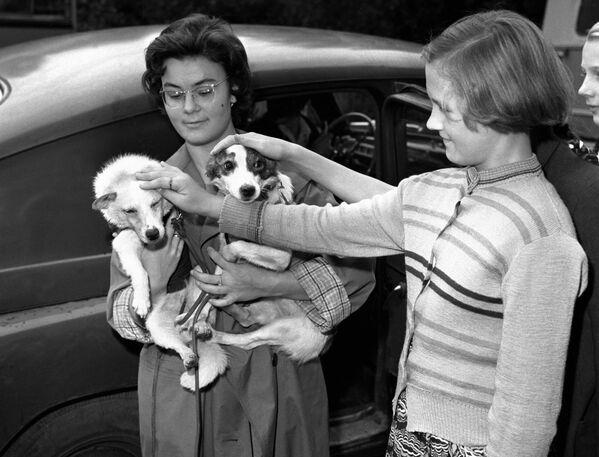 Девочка гладит советских собак-космонавтов Белку и Стрелку, 1960 год - Sputnik Узбекистан