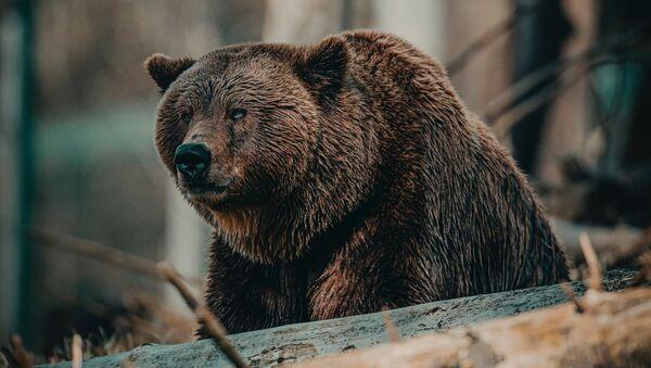 Grizli - Sputnik Oʻzbekiston