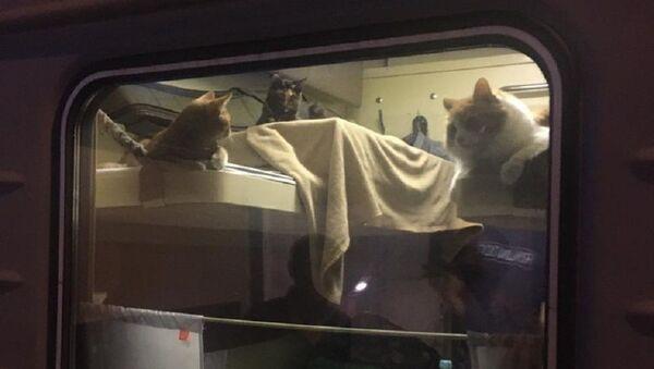 Путешествие с домашними животными - пассажир выкупил все купе для кошек - Sputnik Ўзбекистон