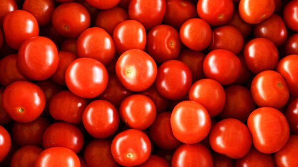 Урожай томатов - Sputnik Узбекистан