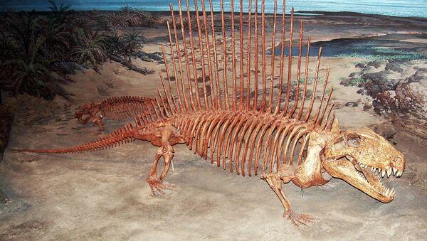 Скелет древного животного - Sputnik Ўзбекистон