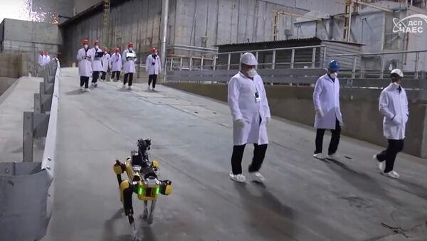 Робот-пес вынюхивает радиацию на Чернобыльской АЭС - Sputnik Узбекистан