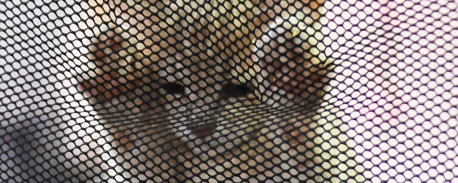 Котенок в переноске  - Sputnik Узбекистан, 1920, 27.11.2020