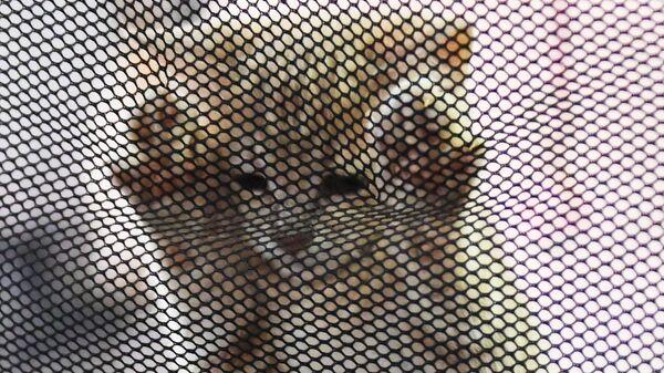 Выставка котят КоШарики Шоу - Sputnik Ўзбекистон