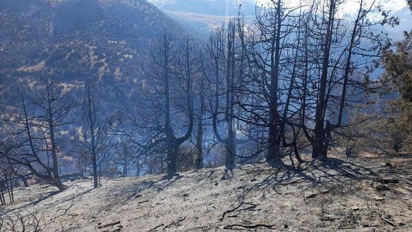 Лесные пожары в Кашкадарьинской области - Sputnik Узбекистан