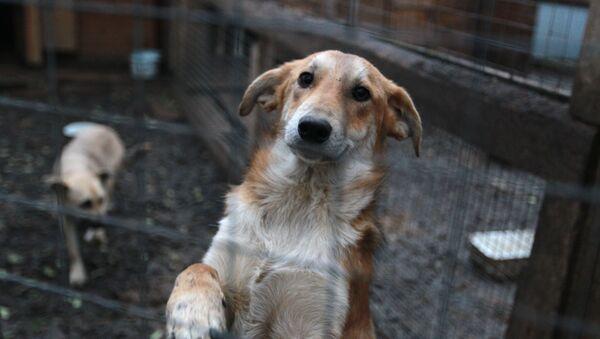 Собаки в приюте для животных - Sputnik Узбекистан
