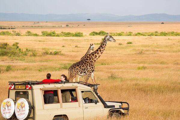 Natsionalnыy zapovednik Masai-Mara v Kenii, kotoraya poluchila zvaniye World's Leading Safari Destination 2020 - Sputnik Oʻzbekiston