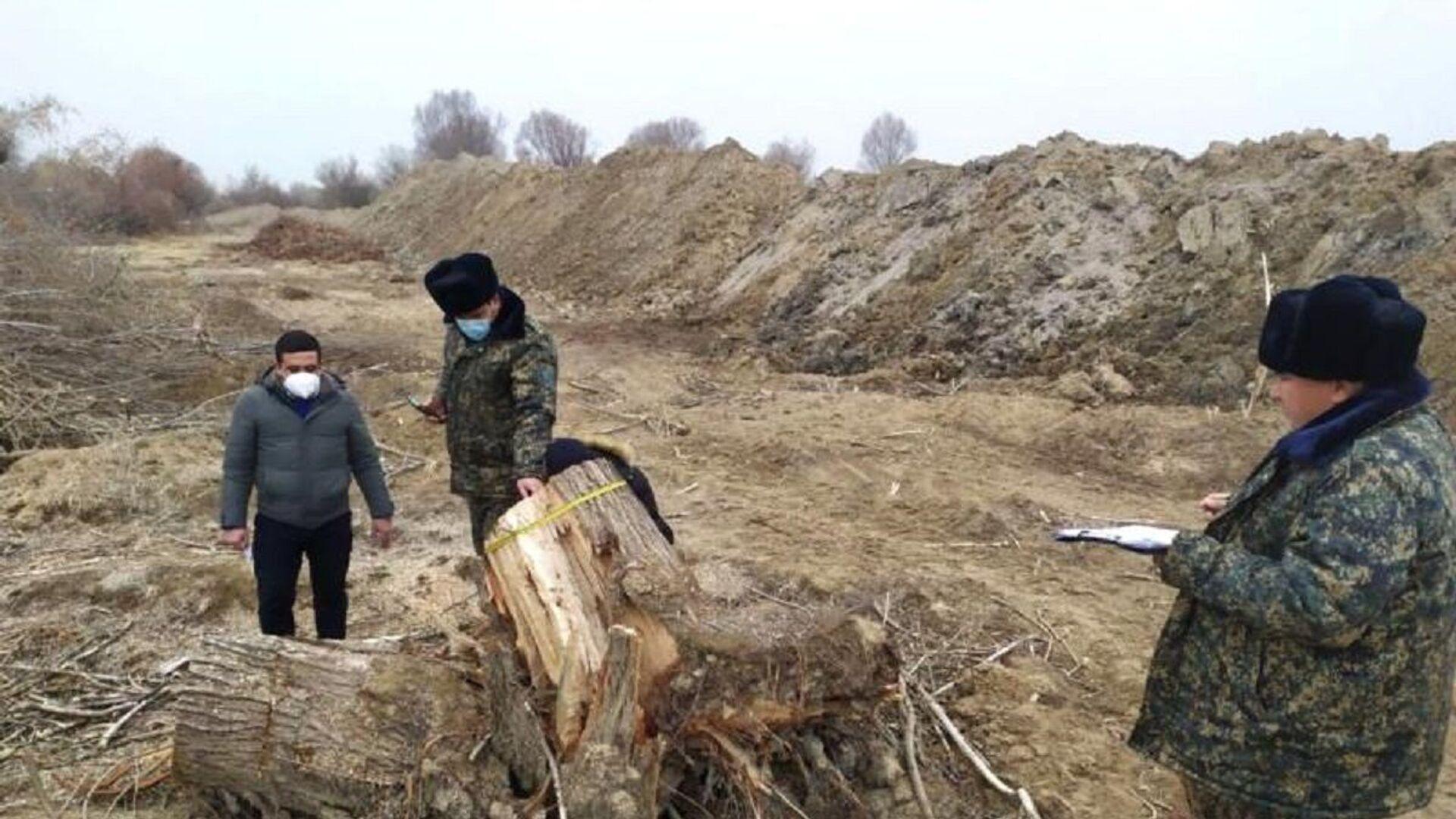 В Куйичирчикском районе Ташкентской области обнаружена вырубка 52 деревьев. - Sputnik Узбекистан, 1920, 24.08.2021
