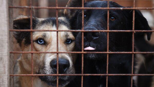Собаки в вольере - Sputnik Узбекистан