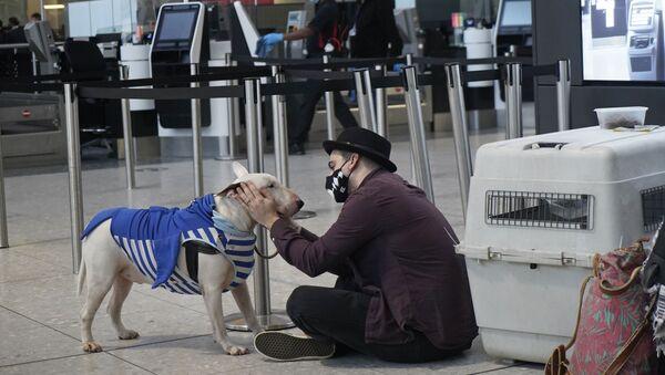 Turist s sobakoy v terminale 2 aeroporta Xitrou v Londone, Velikobritaniya  - Sputnik Oʻzbekiston