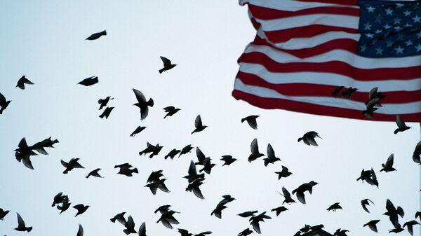 Флаг США - Sputnik Ўзбекистон