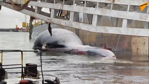 Тушу огромного кита обнаружили у берегов Италии - Sputnik Ўзбекистон