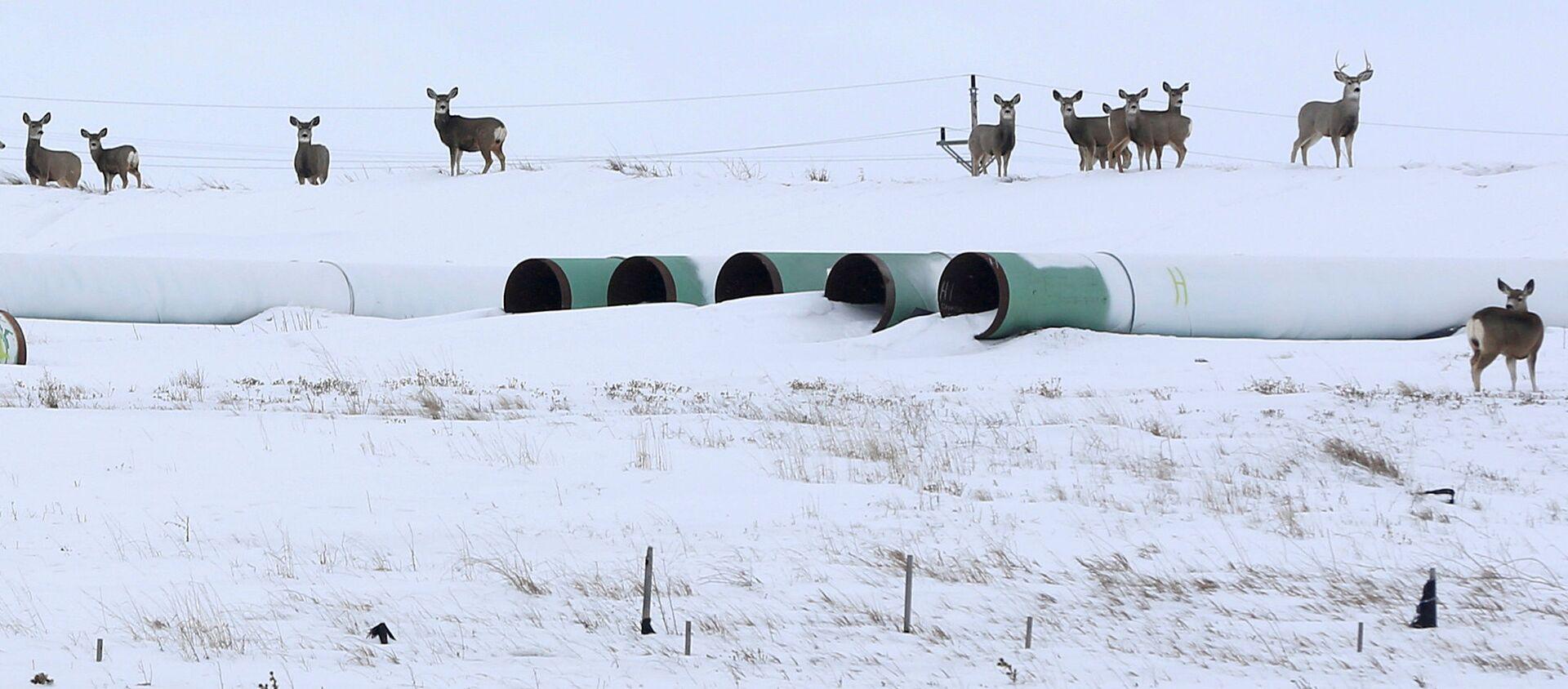 Трубы для нефтепровода Keystone XL в Гаскойне, Северная Дакота - Sputnik Узбекистан, 1920, 26.01.2021