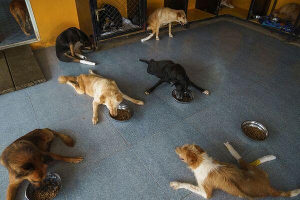 Наиболее частыми травмами молодых собак являются потери одной или нескольких конечностей.  - Sputnik Узбекистан