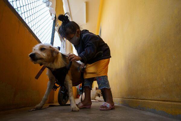 Обычно, после того как заживет рана, животное чувствует себя полностью здоровым и может продолжать жить интересной жизнью. - Sputnik Узбекистан