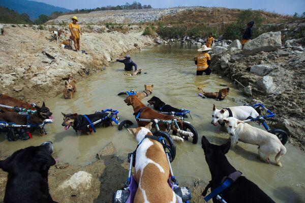 Недостаток одной лапы собаки компенсируют довольно быстро, научившись ходить и даже бегать на трех ногах. - Sputnik Узбекистан