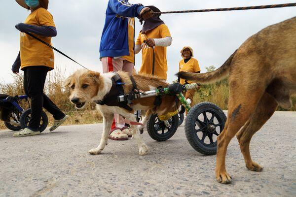 Например, в Таиланде к таким собакам постоянно приходят волонтеры. - Sputnik Узбекистан