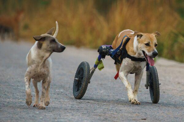 Ни одна собака в таких приютах не страдает от недостатка внимания или движения. Разве что только ждут свою семью... - Sputnik Узбекистан