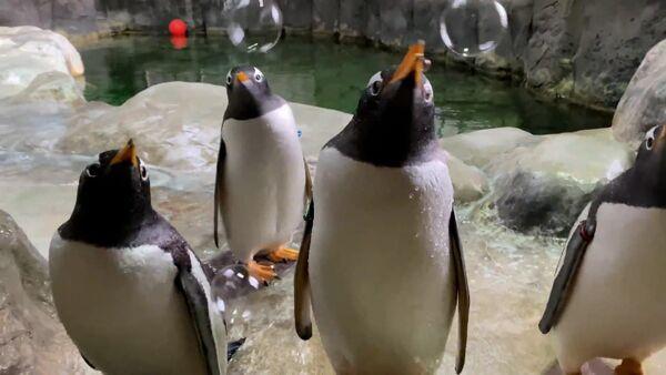 Pingvinam v zooparke ustroili pennuyu vecherinku – video - Sputnik Oʻzbekiston