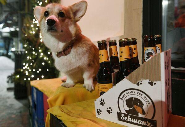В одном из московских баров под названием Underdog в меню появилось пиво для собак. - Sputnik Узбекистан