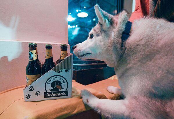 Пиво носит название Хвост (Schwanz) и представлено в настоящих бутылках. - Sputnik Узбекистан