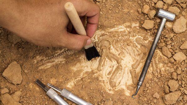 Скелет и археологические инструменты - Sputnik Узбекистан