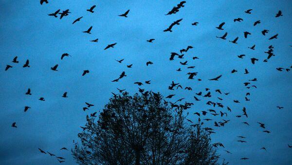 Птицы в небе, иллюстративное фото - Sputnik Узбекистан