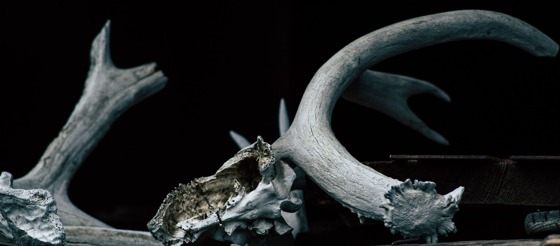 Кость динозавра. Иллюстративное фото - Sputnik Узбекистан, 1920, 25.02.2021