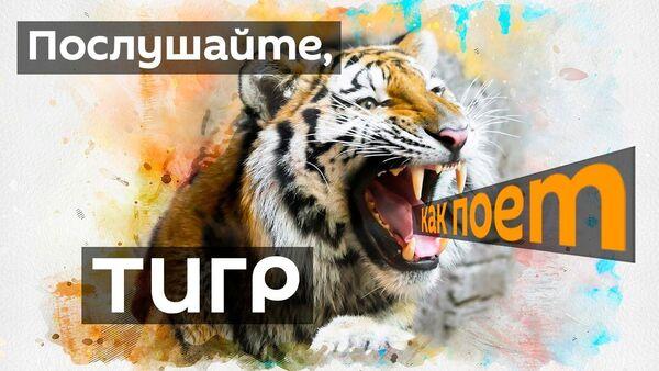 Тигр научился петь, чтобы привлекать к себе внимание - Sputnik Узбекистан