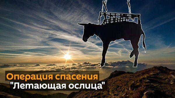 Летающая ослица - Sputnik Узбекистан
