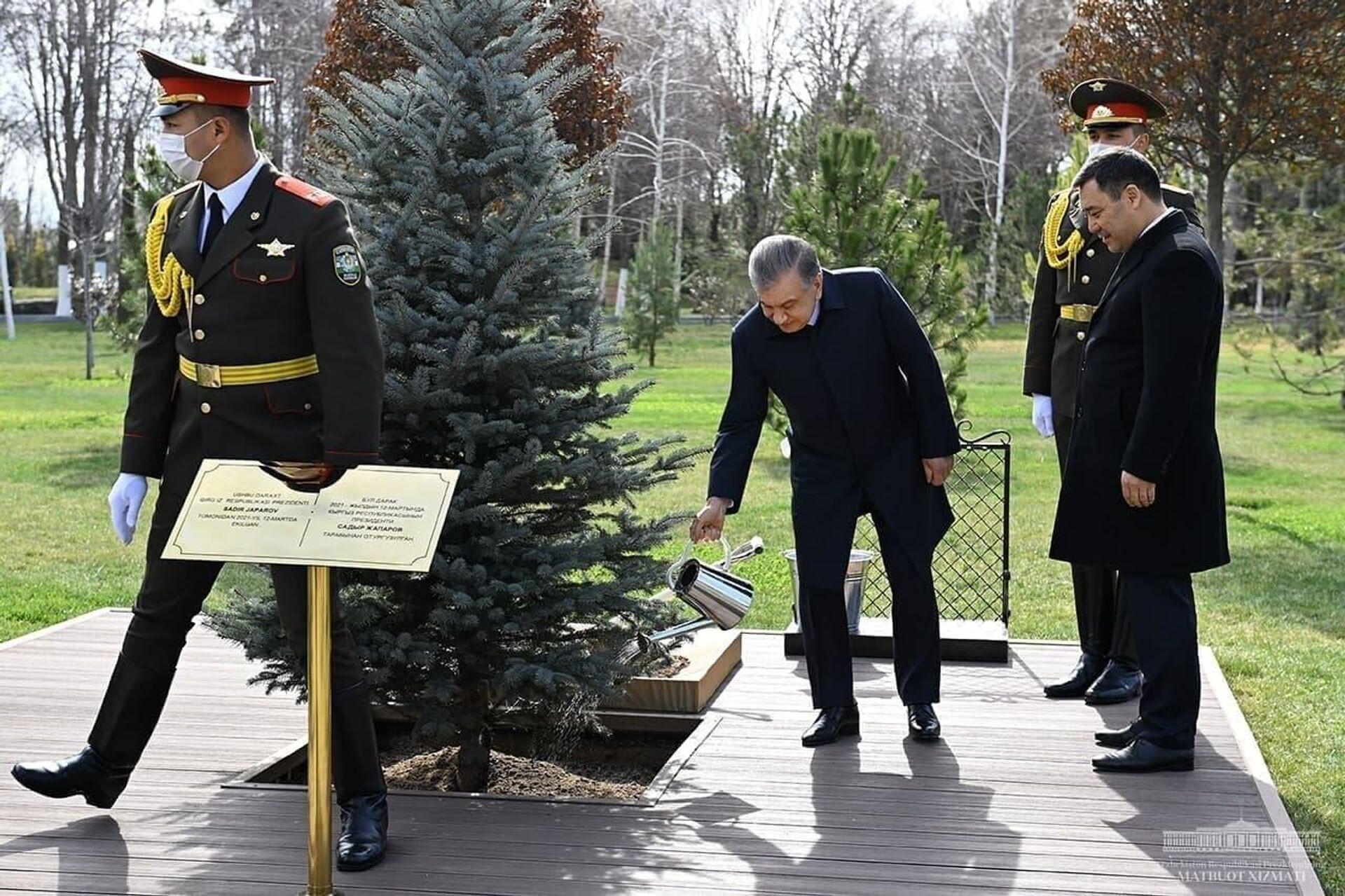 Шавкат Мирзиёев и Садыр Жапаров высадили дерево на Аллее почетных гостей в резиденции Куксарой - Sputnik Узбекистан, 1920, 12.03.2021