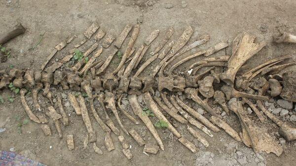 В Намангане найдены останки неизвестного существа - Sputnik Узбекистан