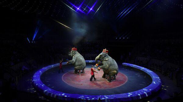 Слоны во время циркового шоу, иллюстративное фото - Sputnik Узбекистан
