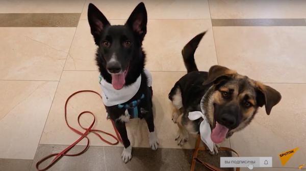 Собаки избавляют от аэрофобии - Sputnik Узбекистан