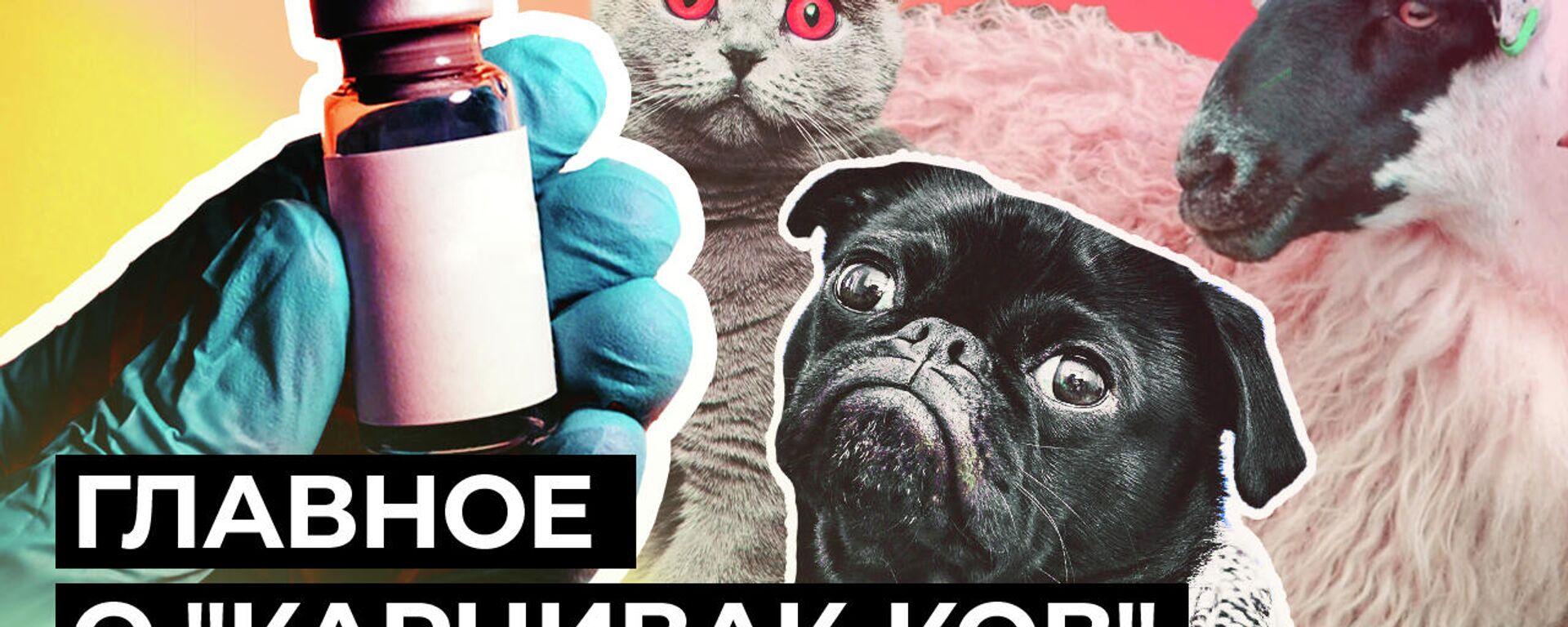 Первую в мире вакцину от COVID-19 для животных зарегистрировали в России - Sputnik Узбекистан, 1920, 01.04.2021