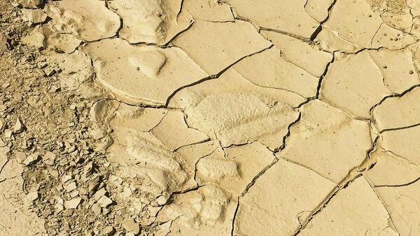 Сухая почва, иллюстративное фото - Sputnik Узбекистан