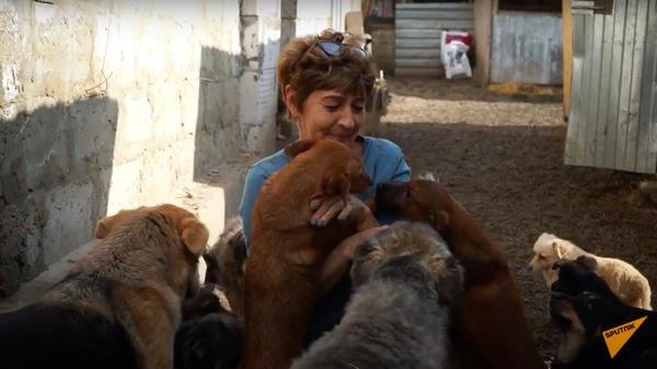 Женщина приютила 700 бездомных собак - Sputnik Узбекистан