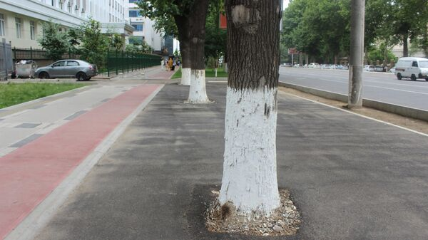 Деревья в Ташкенте - Sputnik Узбекистан