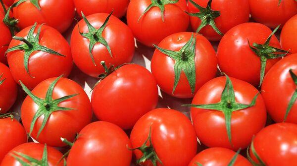 Pomidor - Sputnik Oʻzbekiston