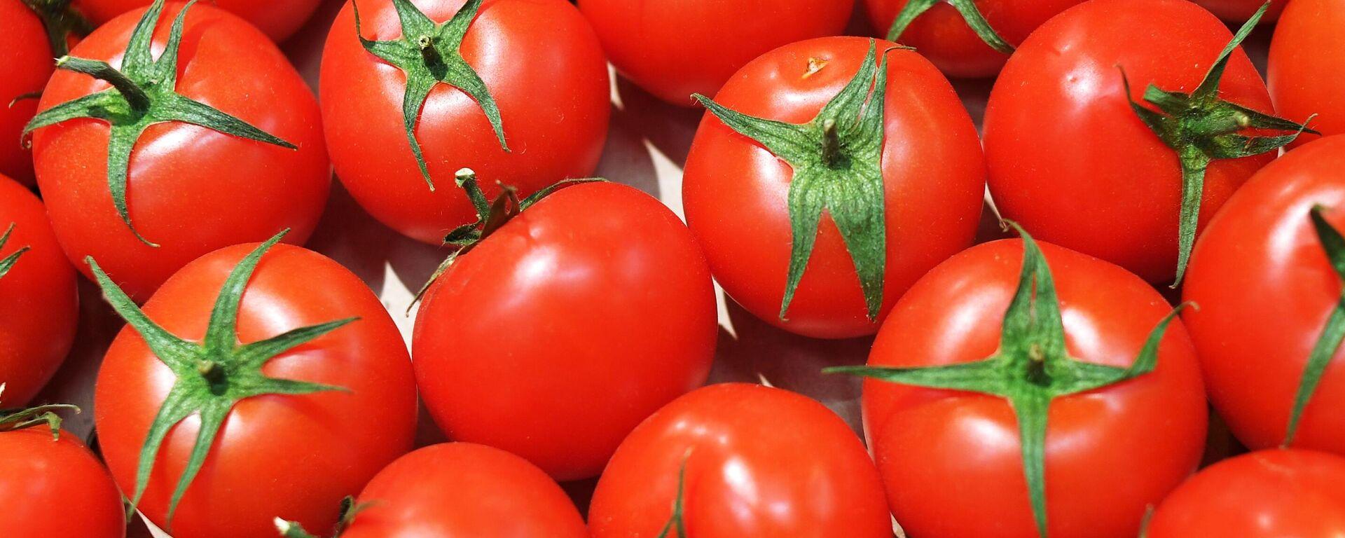 Pomidor - Sputnik Oʻzbekiston, 1920, 27.08.2021