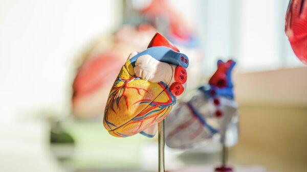 Человеческое сердце, иллюстративное фото - Sputnik Узбекистан