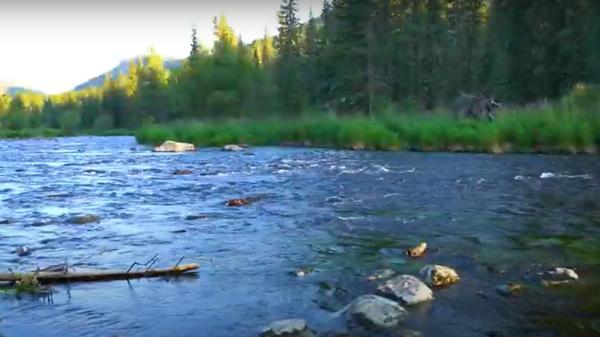 Могучие горы, хвойные леса, зеркальные озера: магия дикой природы Восточного  Казахстана - Sputnik Узбекистан