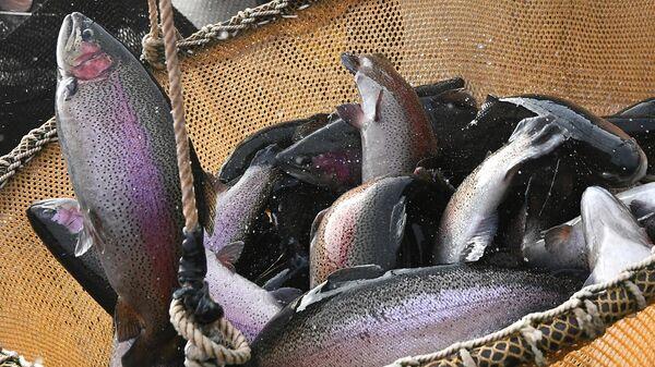 Рыбная ферма - Sputnik Узбекистан