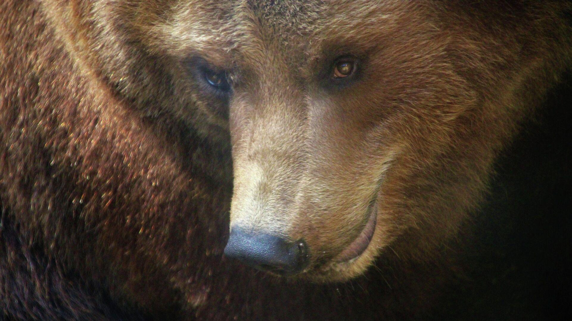 Медведь - Sputnik Узбекистан, 1920, 02.07.2021