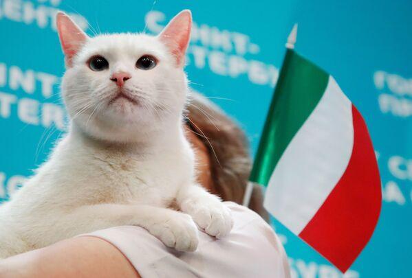 Кот Ахилл, живущий в Эрмитаже в Санкт-Петербурге, выбирает Италию, пытаясь предсказать результат матча открытия Евро-2020 между Италией и Турцией. - Sputnik Узбекистан
