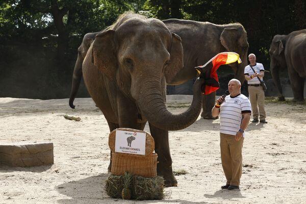 Под руководством хранителя животных Майкла Шмидта 42-летняя слониха Яшода держит флаг Германии, предсказывая результат футбольного матча 1/8 финала чемпионата Европы по футболу Евро-2020 2021 между Англией и Германией. - Sputnik Узбекистан